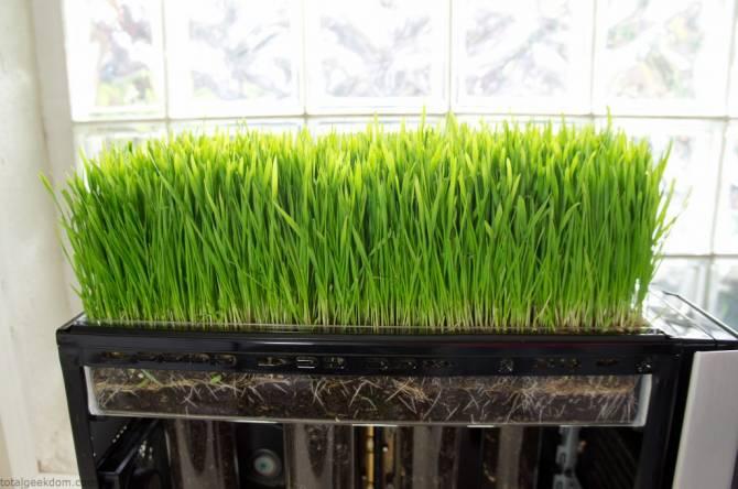 Как выращивать газон в домашних условиях 851