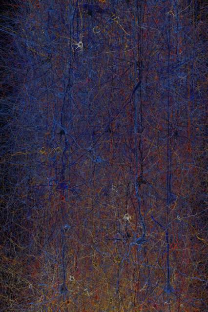 Cуперкомпьютер за 1 млрд евро - симуляция мозга человека (11 фото)