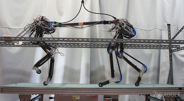 Первые шаги четвероногого робота Pneupard (видео)