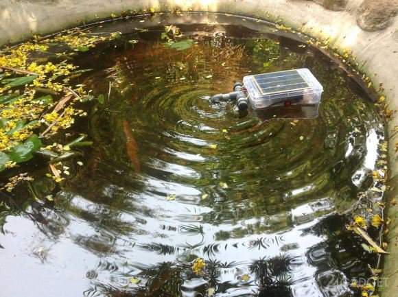 Whats a natural way to kill mosquito larvae in water tanks