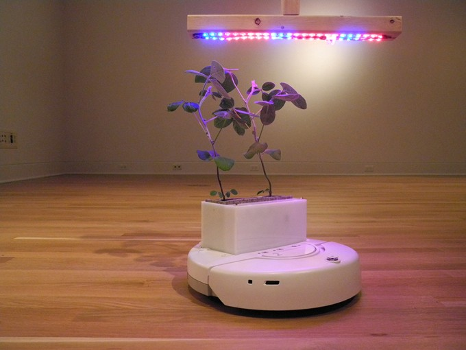 Робот-горшок сам ищет свет для растений (видео)
