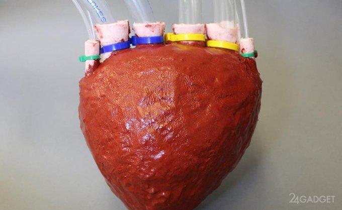 Искусственное сердце из пены (2 фото + видео)