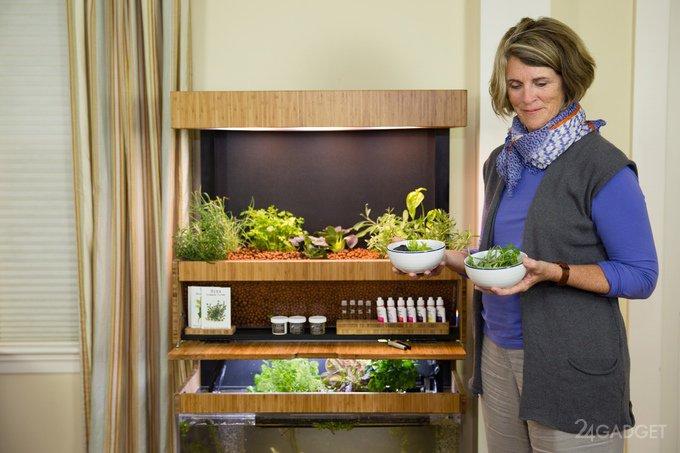 Выращивание еды в домашних условиях 49
