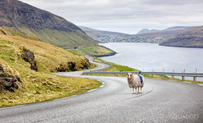 На Фарерских островах панорамы для Google снимают овцы (2 видео)