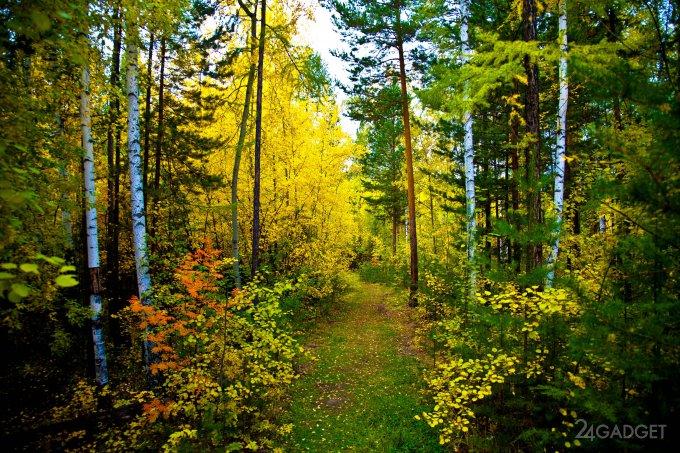 Финны начали сканировать деревья (2 фото)