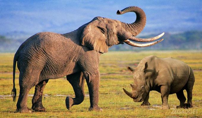 ИИ и дроны охраняют африканских животных от браконьеров (видео)