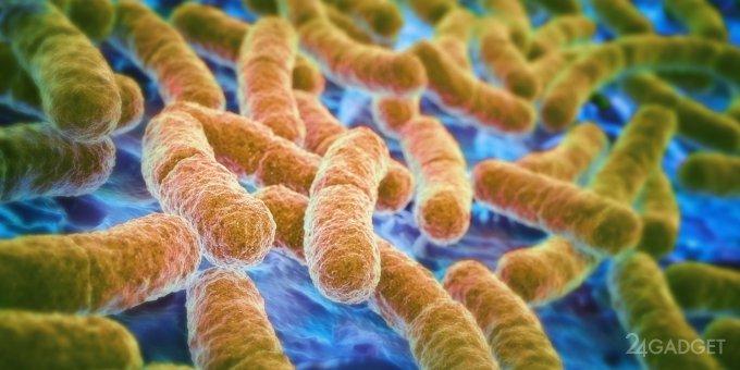 Продлить молодость поможет кишечная бактерия