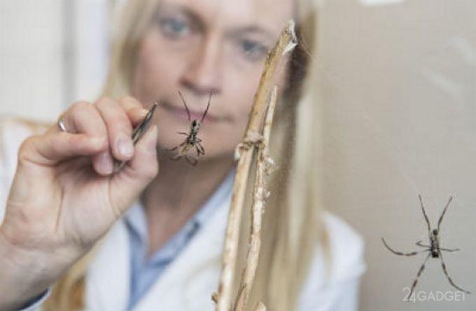 Паутина залечивает значительные повреждения нервов (2 фото)