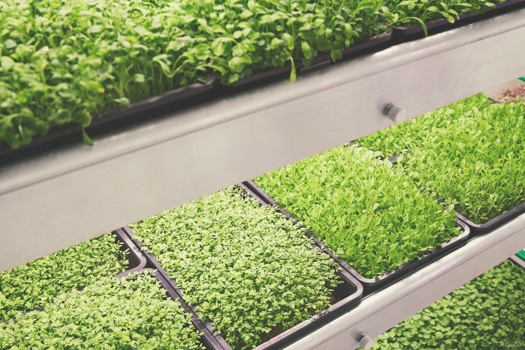 Прибыльный бизнес: выращивание зелени на продажу 15