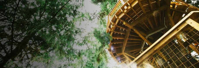 Сотрудники Microsoft будут работать на деревьях (8 фото)