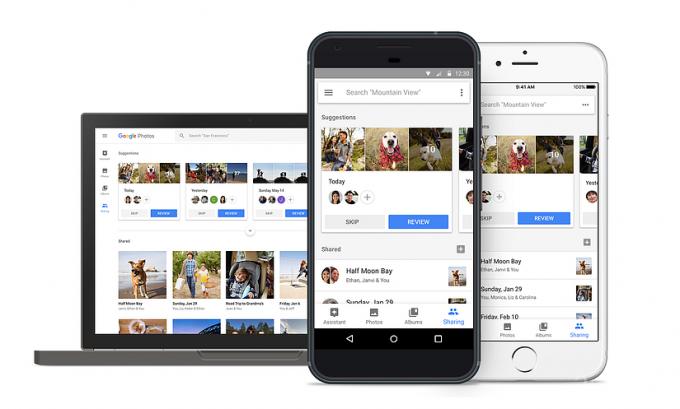 Google Photos распознаёт и сортирует домашних питомцев (4 фото)