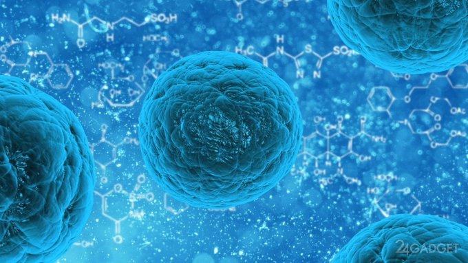 Раковые клетки теперь могут уничтожаться рядовыми клетками
