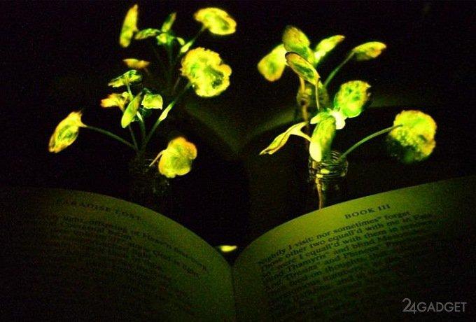 Светящиеся растения придут на смену фонарям