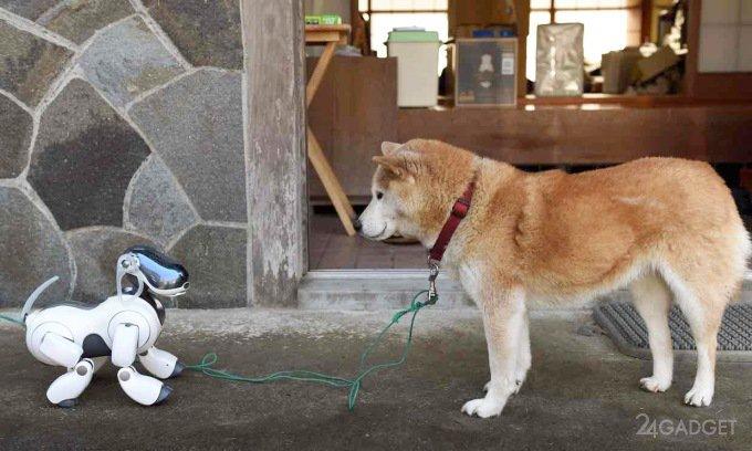 У роботов с ИИ велик шанс озвереть (3 фото)