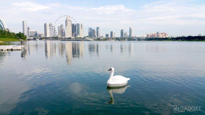 В водохранилищах Сингапура поселились роботы-лебеди (9 фото + видео)