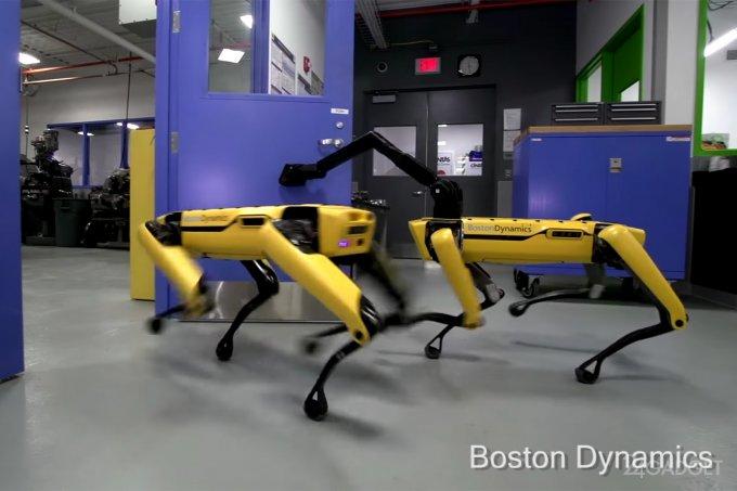 Робособаки SpotMini вступили в заговор и сбежали из лаборатории