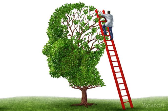 Биологи могут на молекулярном уровне усиливать и ослаблять память