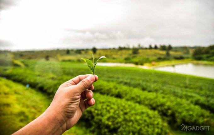 Наночастицы из чайных листьев эффективны в борьбе с раком