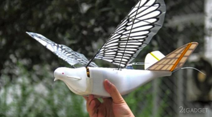 Китайцы маскируют шпионские дроны под голубей (2 фото)