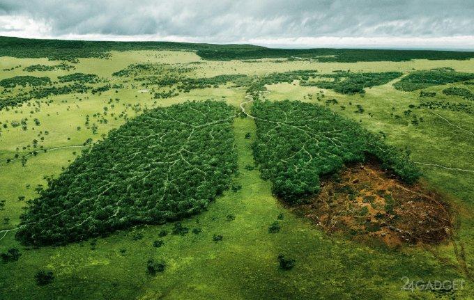 ДНК-база поможет бороться с незаконной вырубкой деревьев (4 фото)