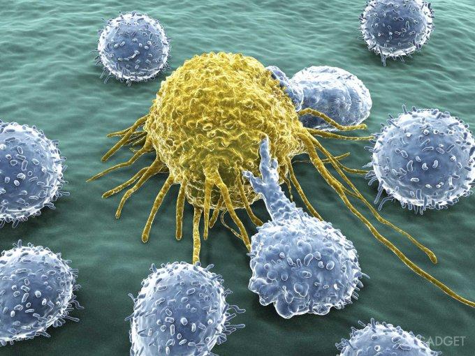 Раковые клетки помогут в борьбе с раковыми опухолями (2 фото)
