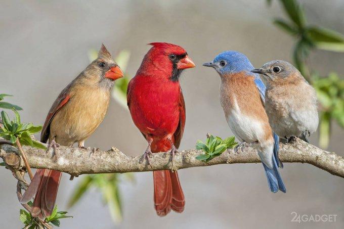 ИИ распознает птиц по пению (2 фото)