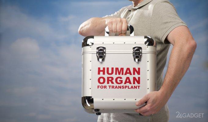 Выращивание органов — очередной шаг в развитии трансплантологии