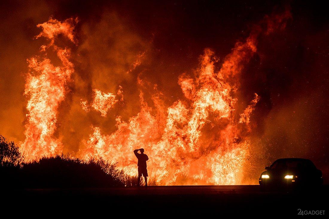 лесные стихийные бедствия художник