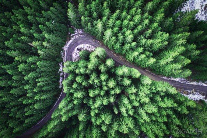 NASA создаст 3D-карту всех земных лесов (4 фото + видео)