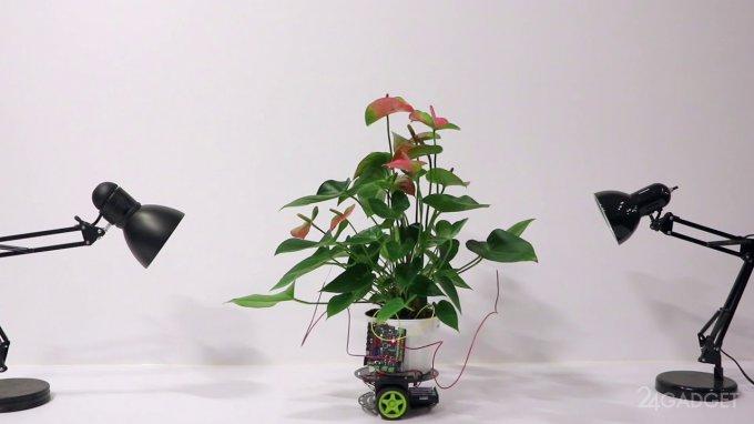 Elowan — растение-киборг из MIT (2 фото + видео)