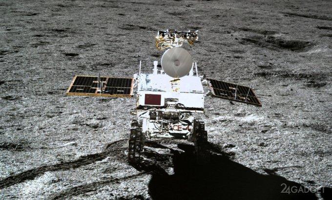 На Луне взошло первое земное растение (2 фото)