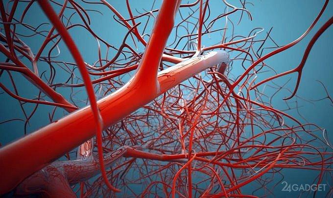 Передавать данные между мозгом и ПК можно по венам человека (4 фото + видео)