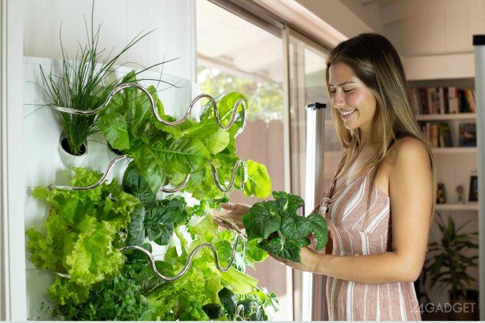 iHarvest – гидропонный домашний сад, вдвое ускоряющий рост овощей (7 фото + видео)