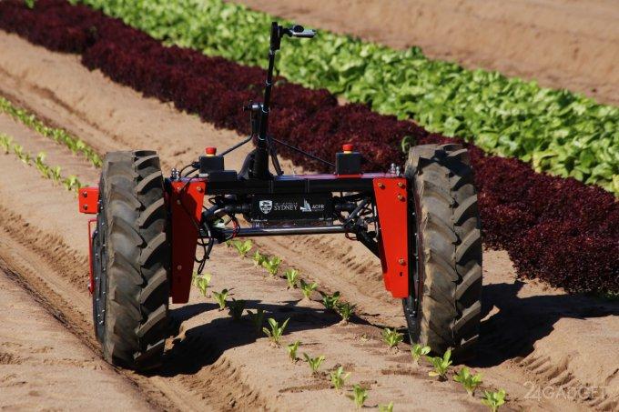 Автономные роботы вытеснят пастухов и фермеров в Австралии (6 фото + 3 видео)