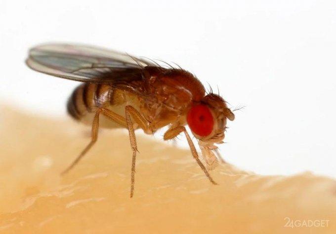 Ученые выяснили, что мухи теряют память в темноте