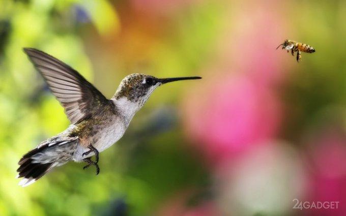 Колибри способны видеть такие цвета, какие мы даже представить не можем