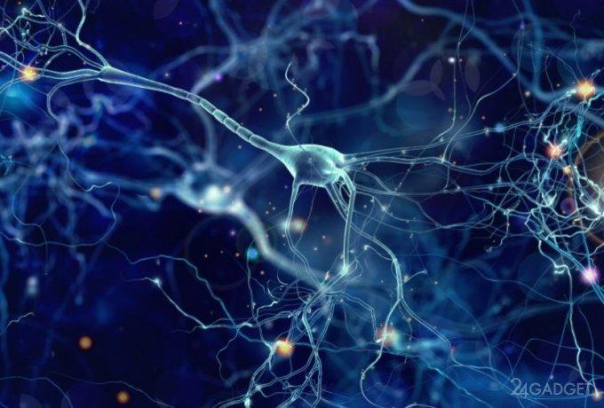 Процесс очистки мозга от погибших нейронов впервые смогли записать на видео