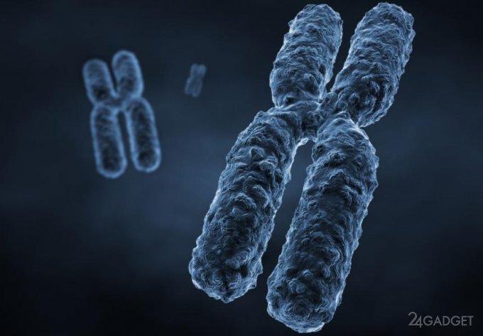 Представлена реальная 3D визуализация хромосом (2 фото)