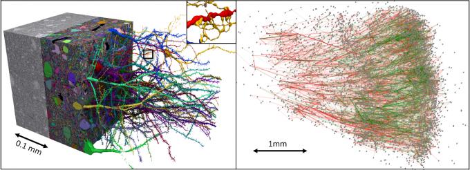 Ученые создали трехмерную цифровую модель одного кубического мм человеческого мозга